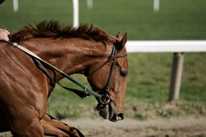 What do you need to stay safe on your horse?